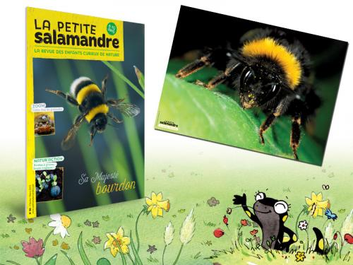 Abonnement à La Petite Salamandre, 1 an