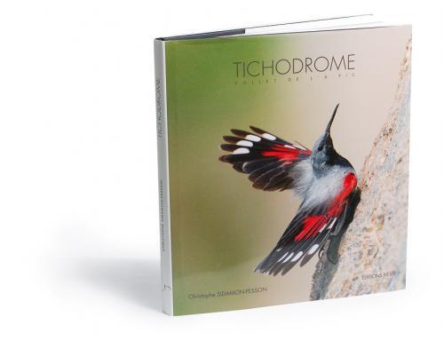 Tichodrome, Follet de l'à-pic
