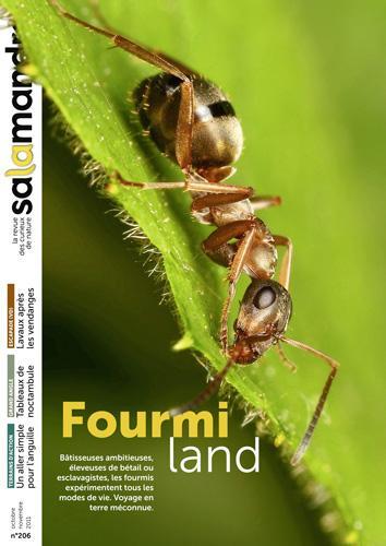 Fourmiland (N°206)