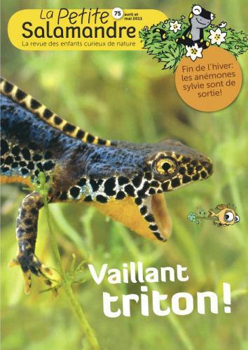 Vaillant triton (N°75)