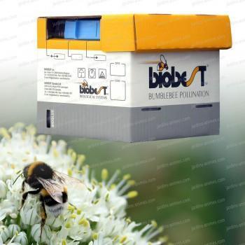Ruche de Bourdons pollinisateurs moins de 500m2
