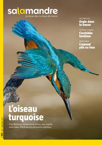L'oiseau turquoise (N°223)