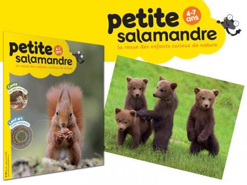 La Petite Salamandre (4-7 ans), abonnement 1 an