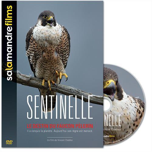 DVD Sentinelle