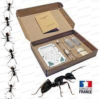 Fourmilière complète 10x16cm, avec fourmis Lasius Niger