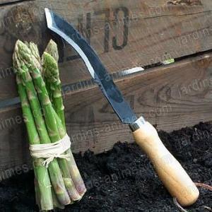 Couteau à asperges acier carbone