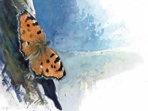 Papillon (la grande tortue): un dessin de Laurent Willenegger
