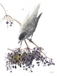 Fauvette: un dessin de Laurent Willenegger
