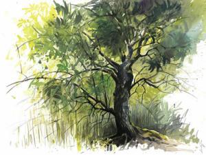 Sureau noir: un dessin de Laurent Willenegger