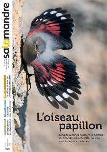 L'oiseau papillon (N°217)