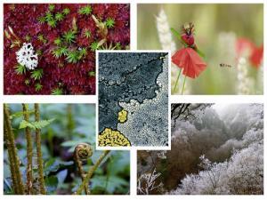 Les photos de végétaux (Gilbert Hayoz)