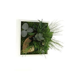 Tableau Végétal Stabilisé MONO 22 x 22