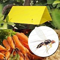 Traitement bio contre la mouche de la carotte Psila Rosae