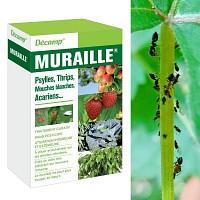 Traitement Muraille antiparasitaire au Siltac - sans pesticide 10ml