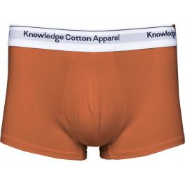 2 Pack Underwear Harvest Pumpkin