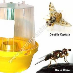 Piège pheromone contre mouches