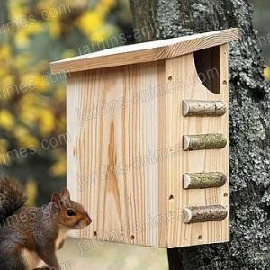 Maison écureuil
